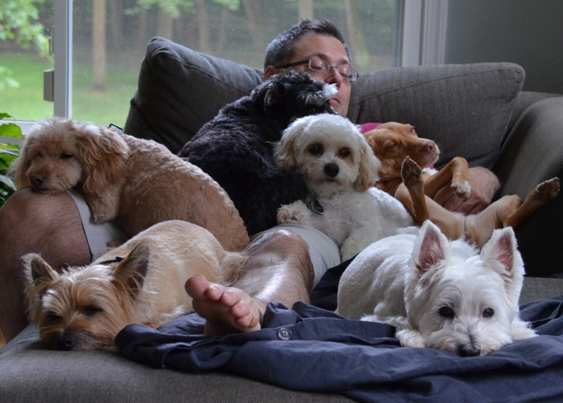 9 научно подтвержденных причин завести собаку