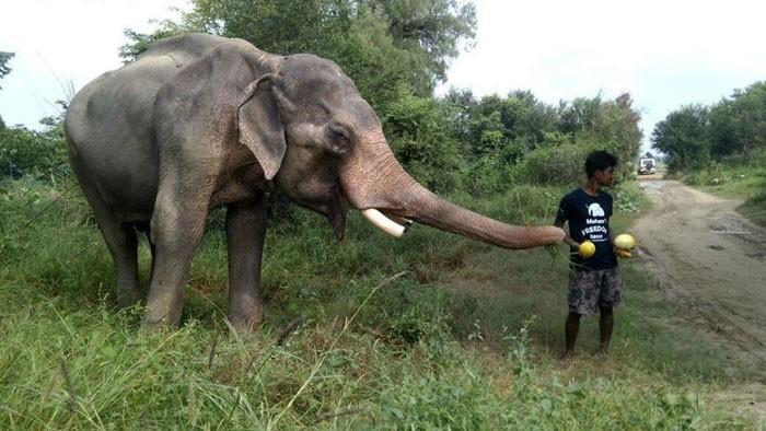 Слон теперь на свободе после 50 лет заключения в рабстве