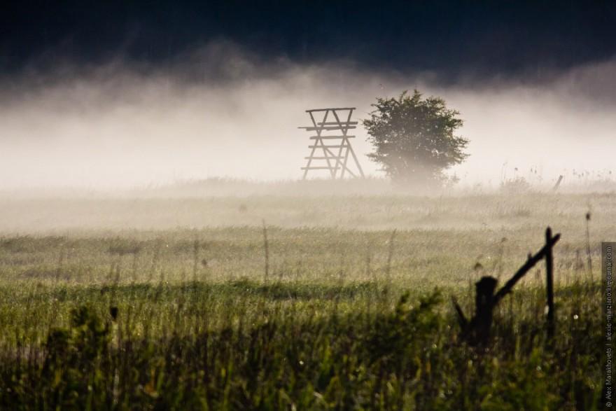 Туманы Беловежской пущи