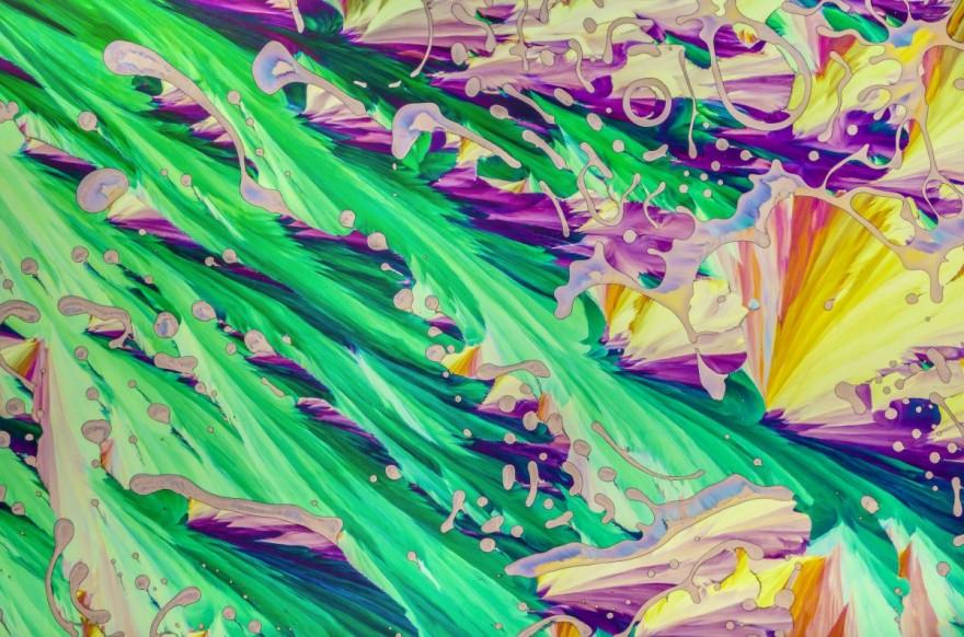 Скрытая вселенная: лучшие фото года из-под микроскопа