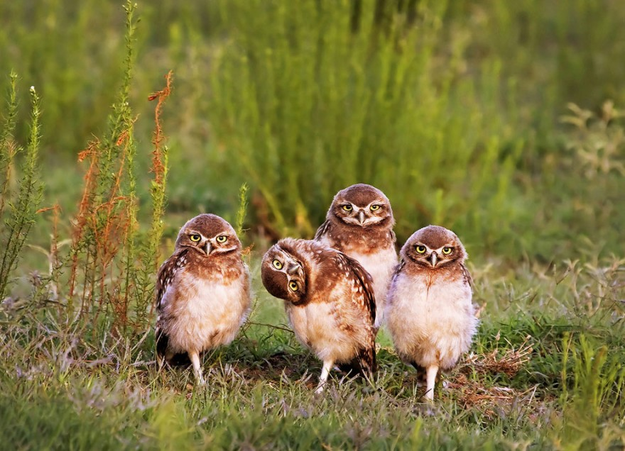 25 ���������� ������������ �������� 2016 Comedy Wildlife Photography Awards
