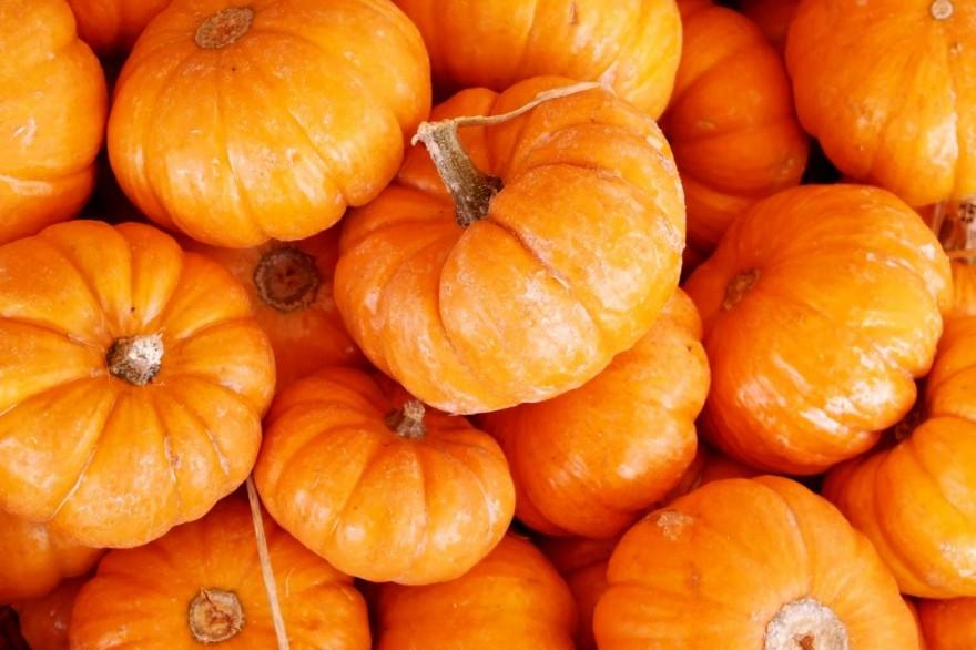 10 занимательных фактов о чудо-овоще сезона — тыкве