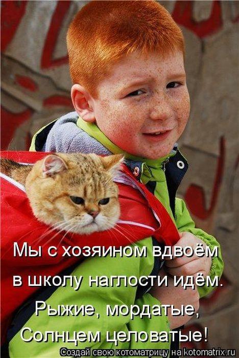 Веселая котоматрица (50 фото)