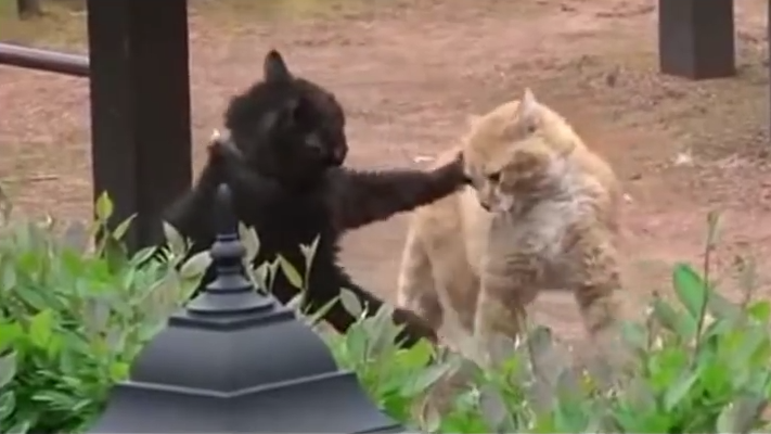 Драка котов ✔ Fighting Cats