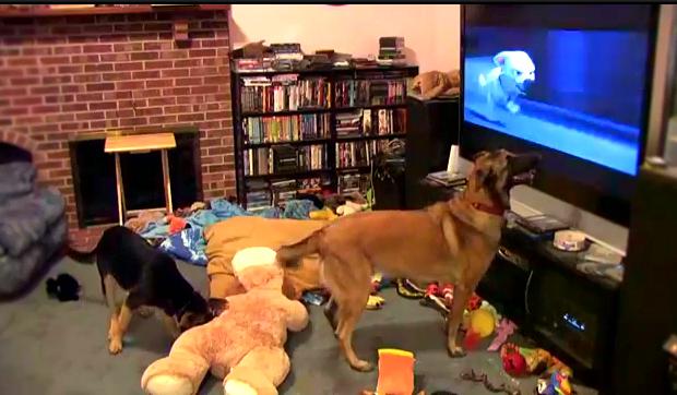Веселый пес с удовольствием смотрит свой любимый мультфильм — «Вольт»