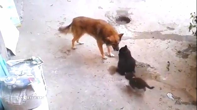 Кошка привела котят к своему другу / Mother cat with kittens came to old friend