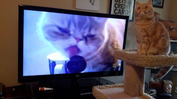 Забавные коты (27 фото + 3 гиф)