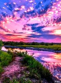 Красота в природном мире