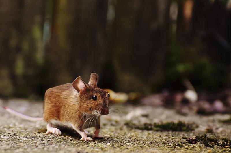 В мире квадратных животных