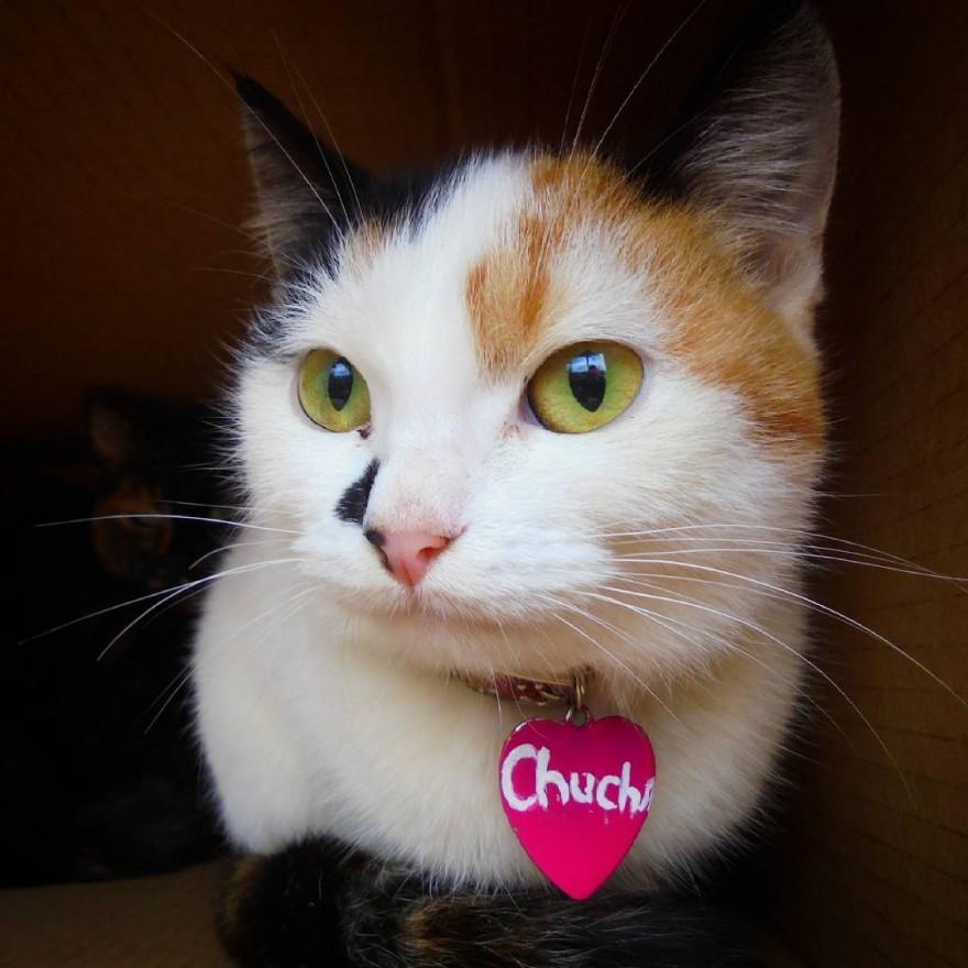 """Необычный кот с 3 пятнами в форме """"Сердца"""""""