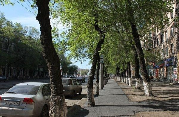 Заасфальтированные деревья можно не вскапывать (3 фото)