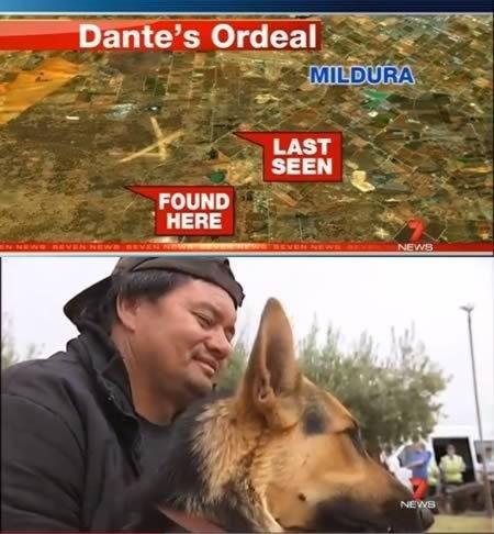 Самые трогательные истории о собачьей преданности (10 фото)