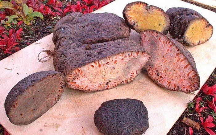 Копальхен – опасный деликатес коренных жителей Севера (6 фото)