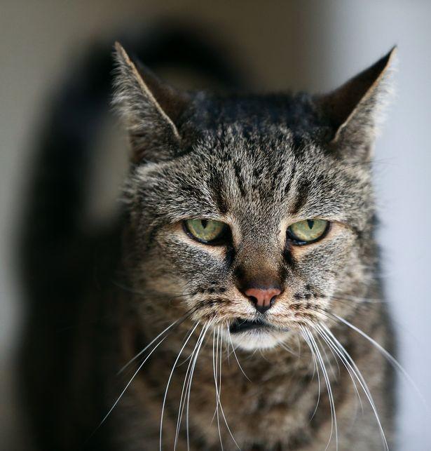 Умер самый старый кот в мире (7 фото)