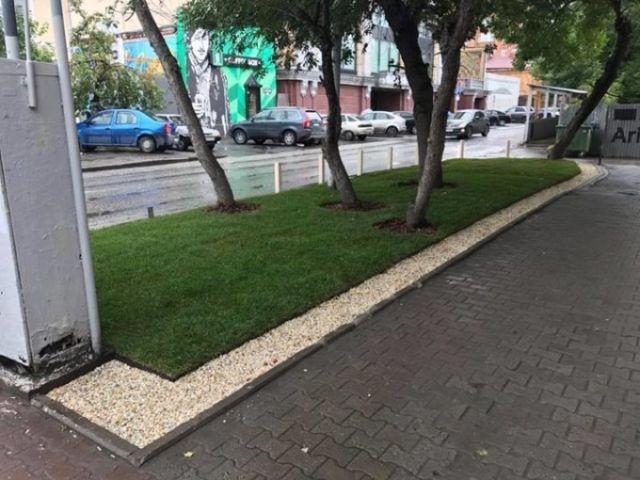 Житель Екатеринбурга обустроил в центре города экспериментальный газон (3 фото)