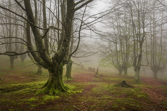 Мистический лес без фотошопа (10 фото)
