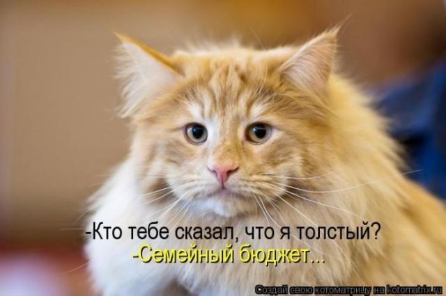 Позитивные и забавные приколы с домашними животными (50 фото)