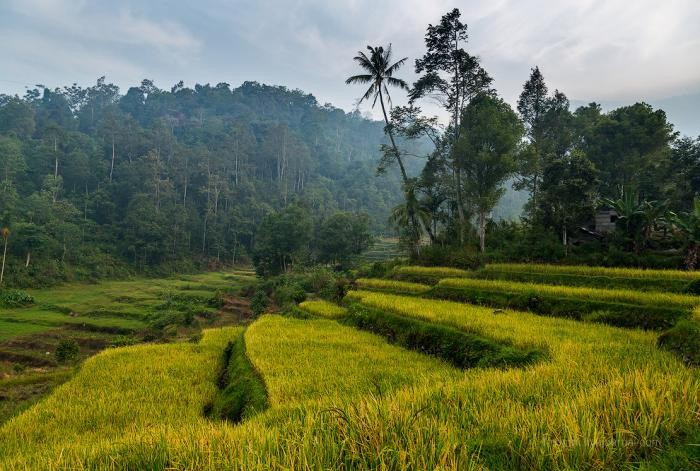 Путешествие в Индонезию (25 фото)