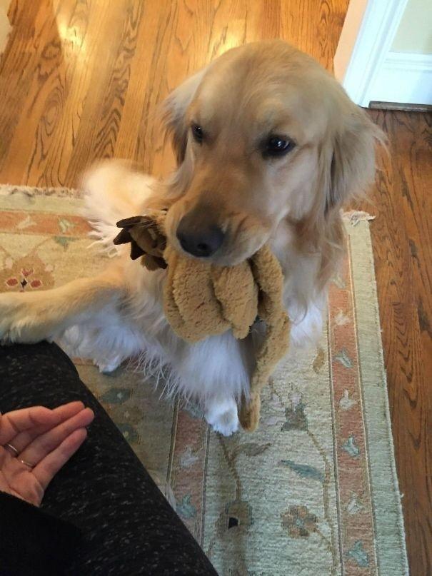 25 раз, когда домашние животные приносили своим владельцам самые неожиданные подарки (26 фото)