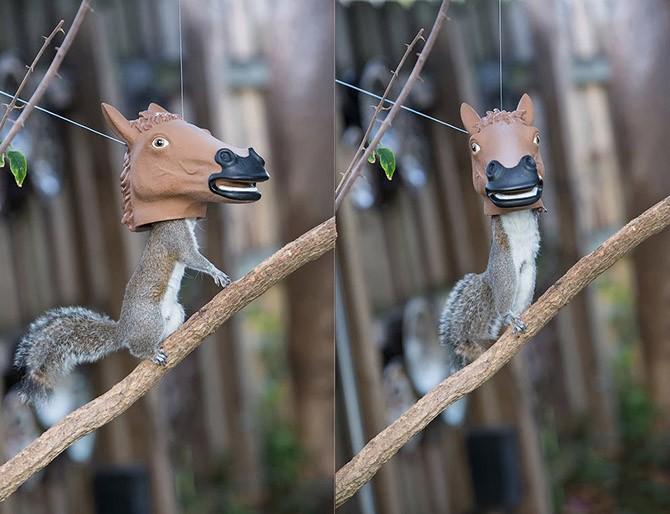 Забавные животные (19 фото)