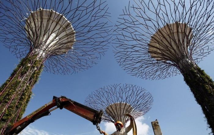 Супер-деревья в Сингапуре (4 фото)