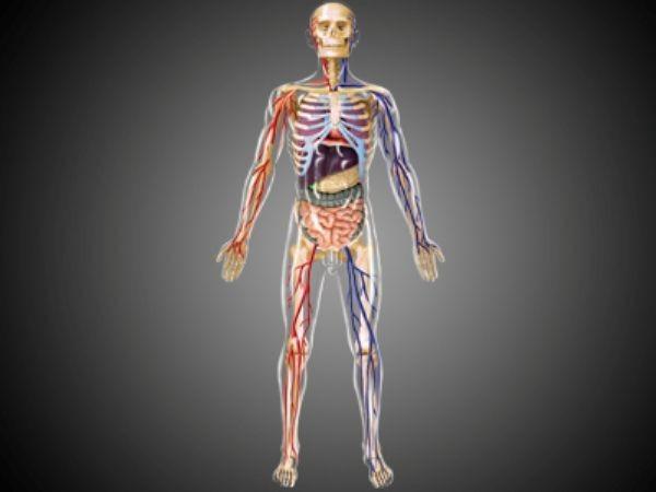 Сумасшедшие факты о вашем теле (12 фото)