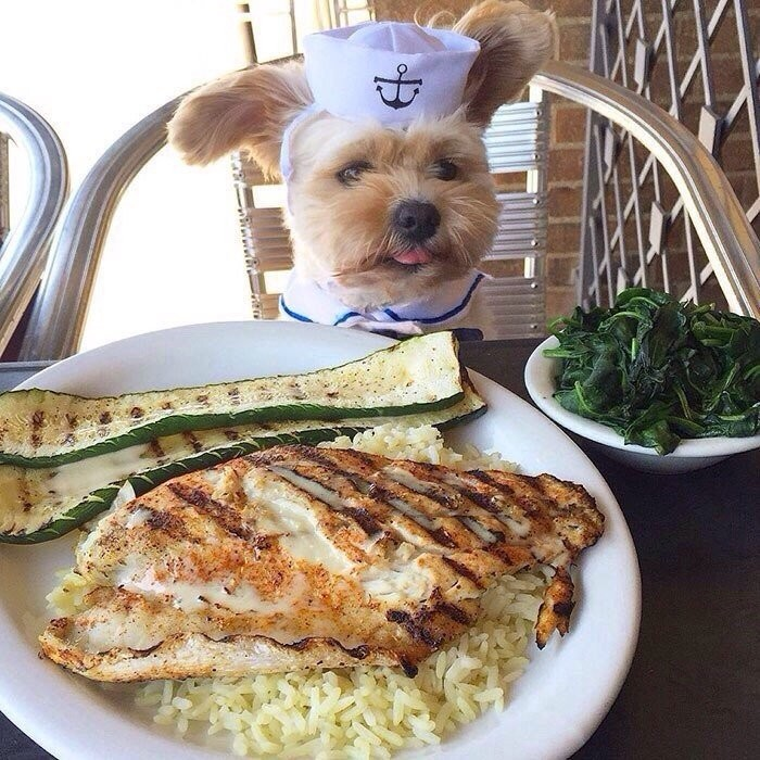 Попай — собака, чей Instagram сделал её звездой интернета (9 фото)