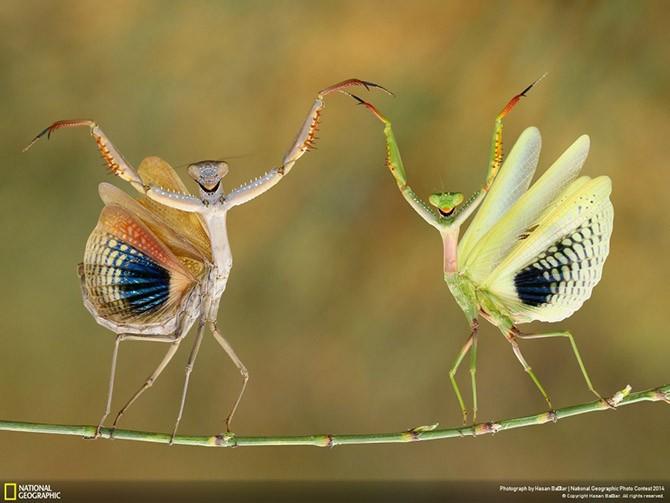 Лучшие фотографии National Geographic (25 фото)