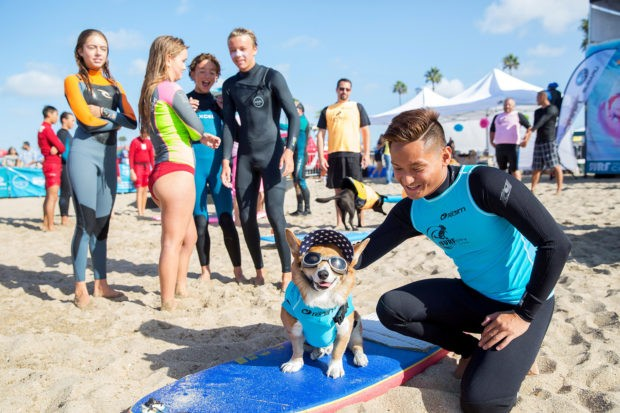 В Калифорнии прошло состязание собак-сёрферов (14 фото)