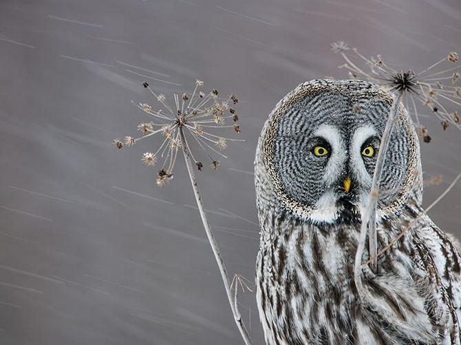 Лучшие фотографии National Geographic (21 фото)
