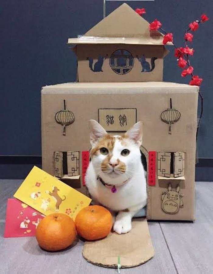 Ветеринары создают невероятные картонные домики для своего кота (16 фото)