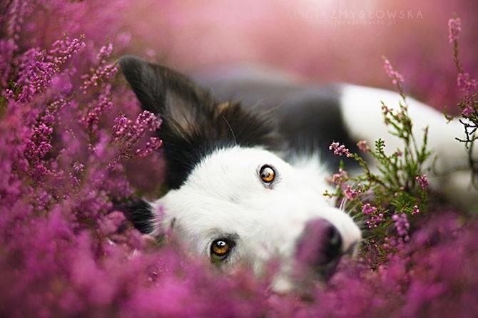Яркие и живые портреты собак (17 фото)