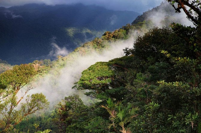 Огромнейшие леса на планете (11 фото)