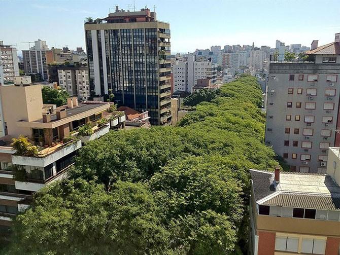 Cамые волшебные улицы в тени цветов и деревьев (15 фото)