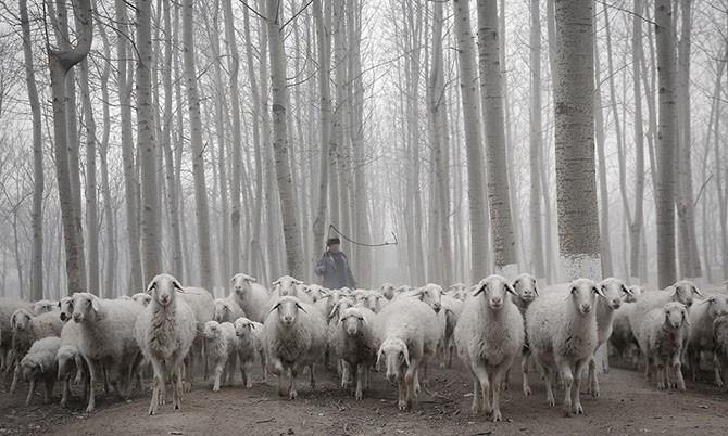 Лучшие фотографии животных за неделю (20 фото)