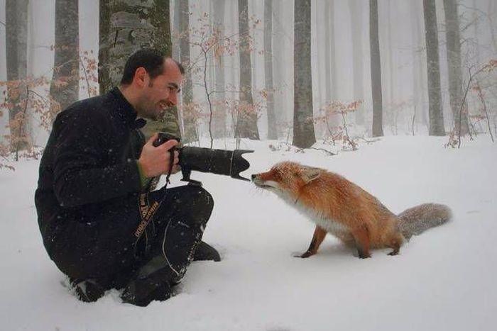 Подборка замечательных снимков (51 фото)