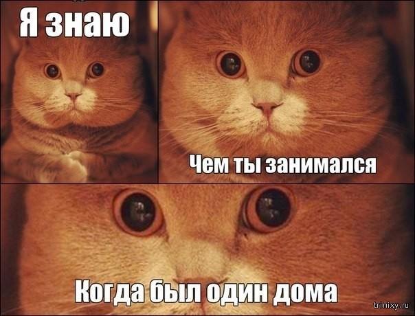 Смешные картинки с надписями (29 фото)