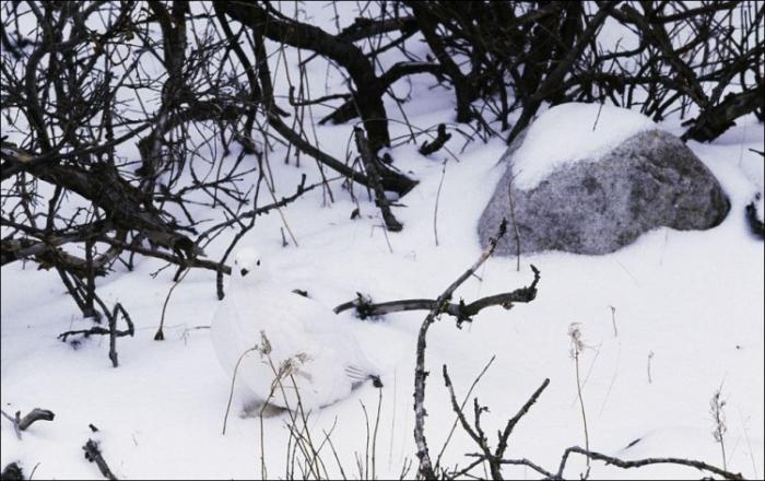 Природная маскировка (16 фото)