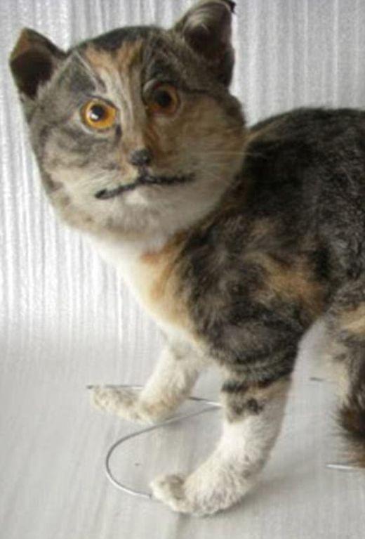Самые нелепые чучела животных (25 фото)