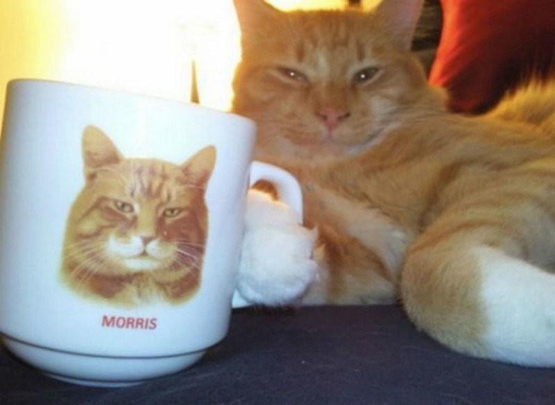 Смешные кошачьи фотографии (28 фото)