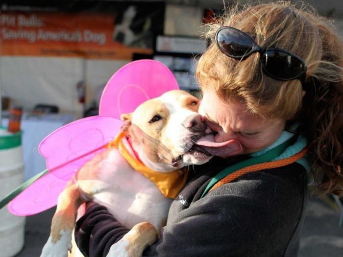 Подтвержденные научными исследованиями причины завести собаку (10 фото)