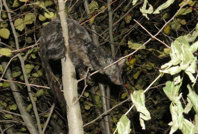 В Екатеринбурге неизвестное животное вылезло из унитаза (5 фото)