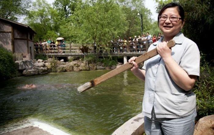 Как чистят зубы бегемоту в шанхайском зоопарке (5 фото)