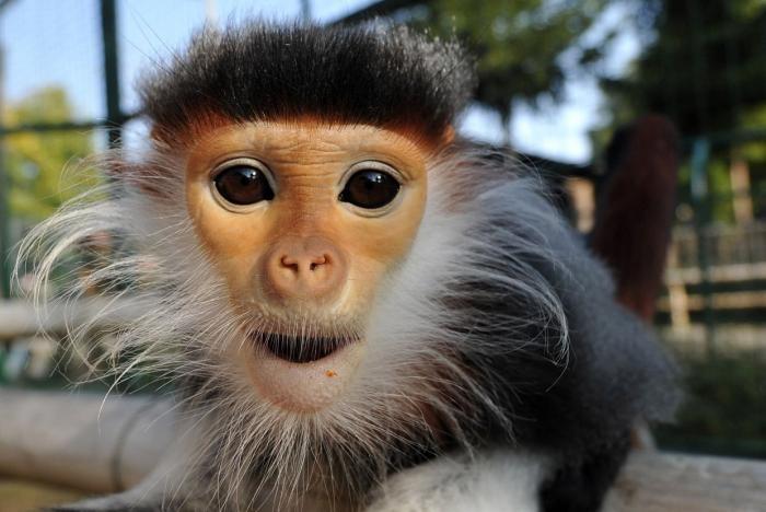 Фотографии животных из разных уголков мира (27 фото)