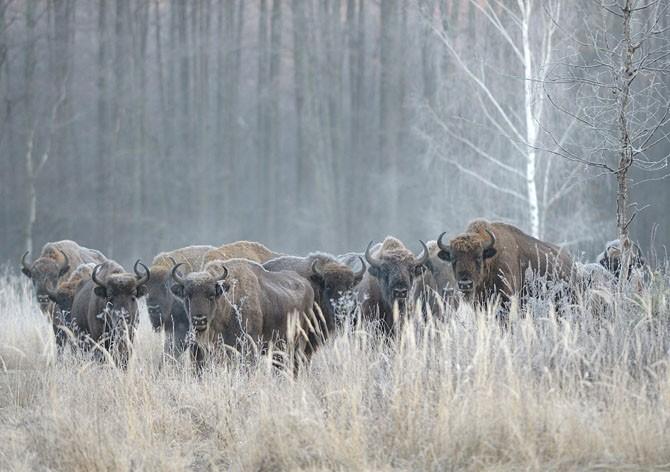 Защитник природы (50 фото)