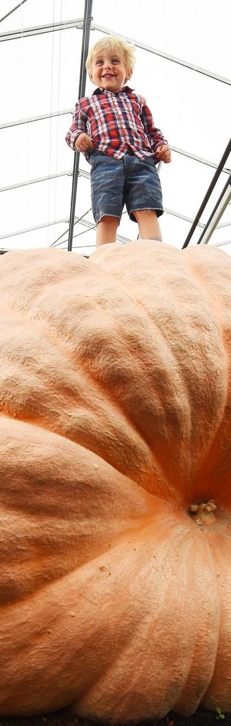 Новый рекорд: тыква-монстр, весом более тонны (8 фото)