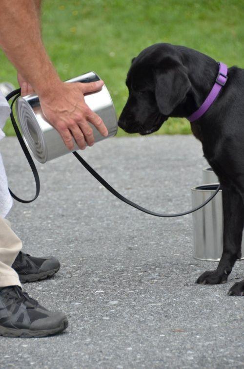 ЦРУ уволило со службы собаку, которая не хотела искать взрывчатку (7 фото)