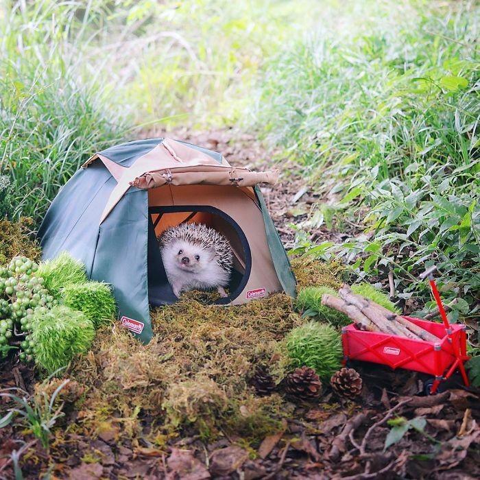 Этот ежик отдыхает на природе лучше, чем мне когда-либо удавалось (7 фото)