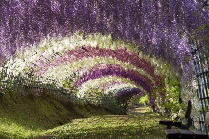 Самые красивые тоннели из деревьев (10 фото)