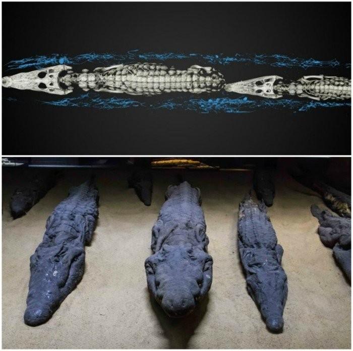 Самые удивительные археологические находки Египта (9 фото)